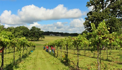 The McGinley Family Winery