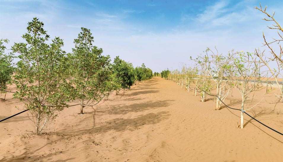 Reducing Desertification with Native Trees