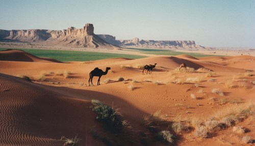 Camping with Camels: My Introduction to the Kingdom - Part V